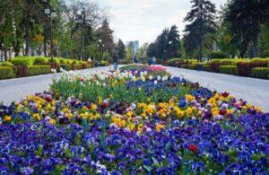 Весна в Краснодаре 2018