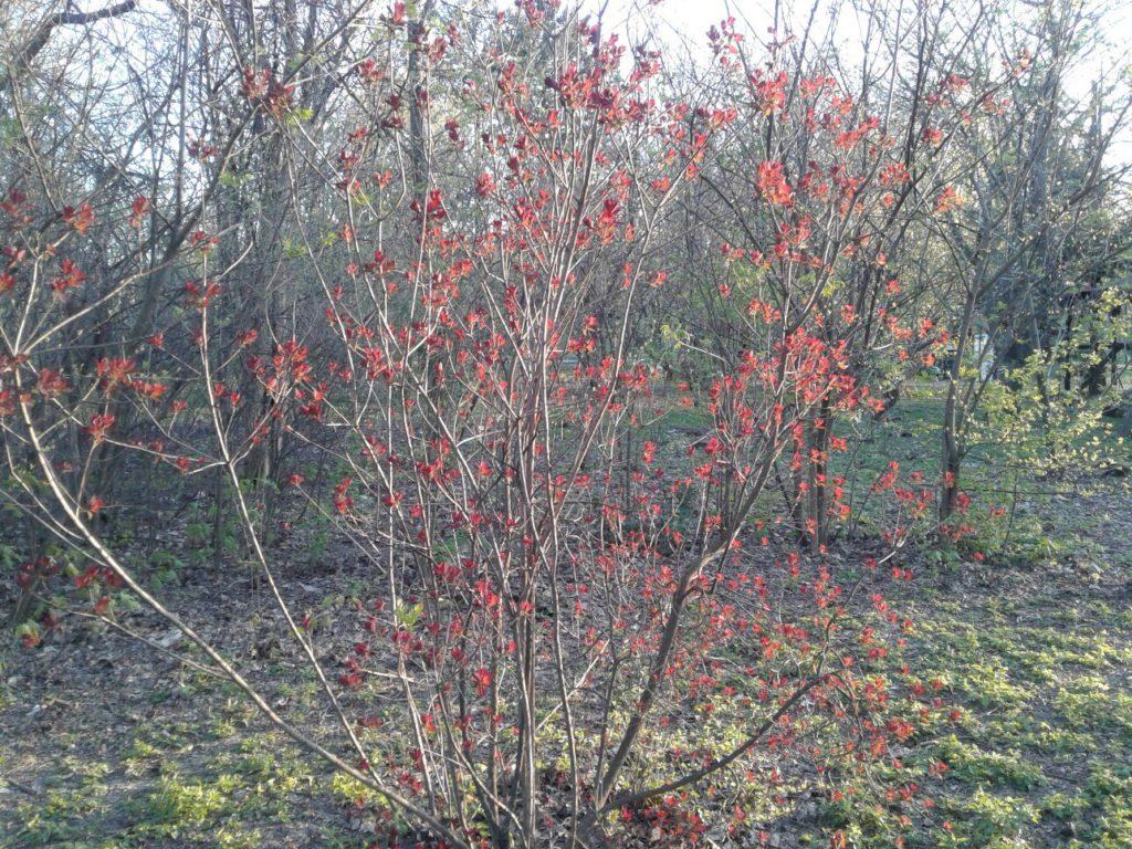 Растение 2. Если вы знаете что цветет на этом фото - напишите в комментариях к этой статье!