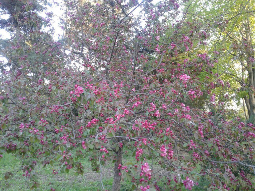 Растение 3. Если вы знаете что цветет на этом фото - напишите в комментариях к этой статье!