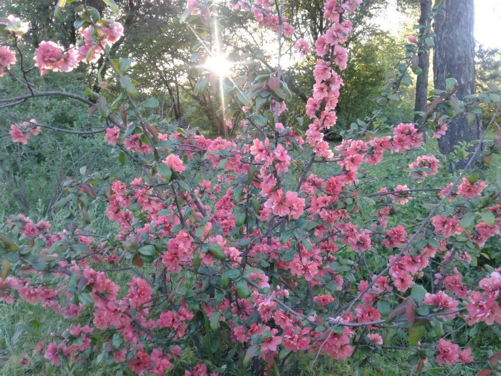 Растение 4. Если вы знаете что цветет на этом фото - напишите в комментариях к этой статье!