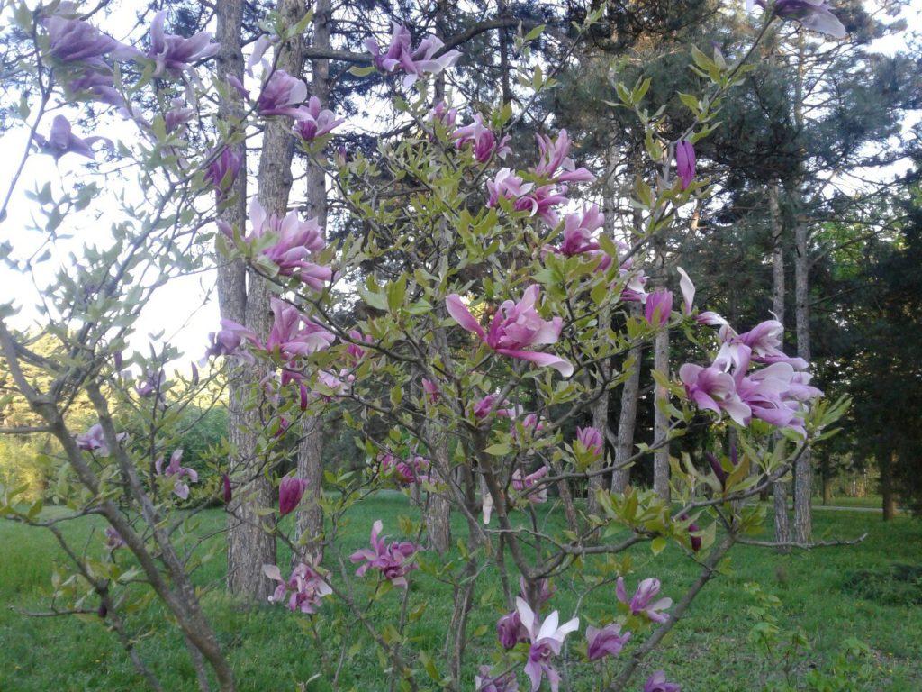 Растение 5. Если вы знаете что цветет на этом фото - напишите в комментариях к этой статье!