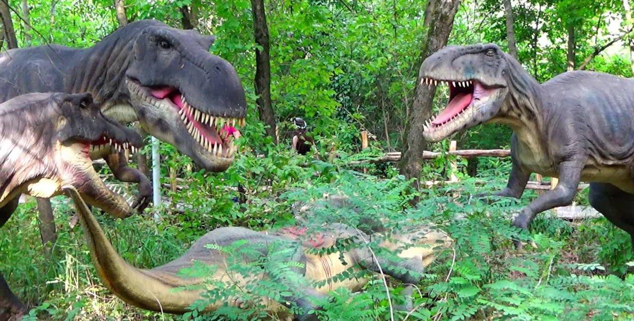 Зоопарк Сафари-парк в Краснодаре