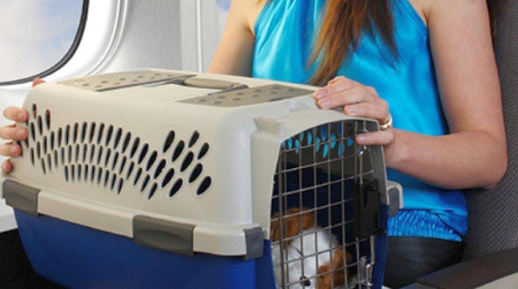 Как перевозить кошку и животных в самолете